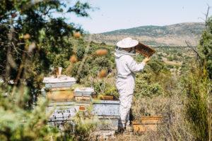 l'apiculteur et son miel